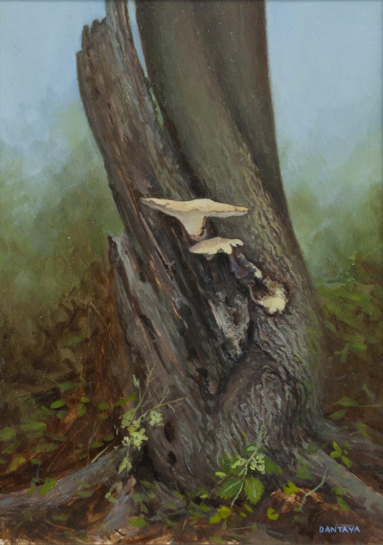 Sutherland – Tree Study